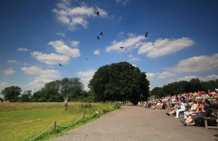 Top 10 things to enjoy this summer at the Hawk Conservancy Trust