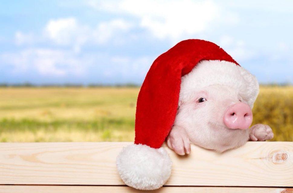 Visit Cholderton Farm this Christmas