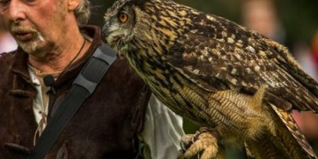 Medieval Falconry at The Bishop's Palace Saturday 7th April 10am-4pm