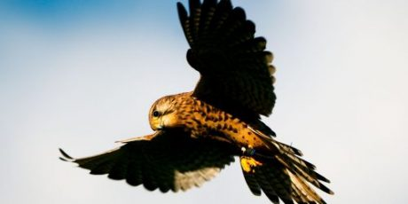 Join the Hawk Conservancy Trust for Music on the Wing