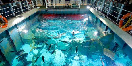 Win a family ticket to Bristol Aquarium