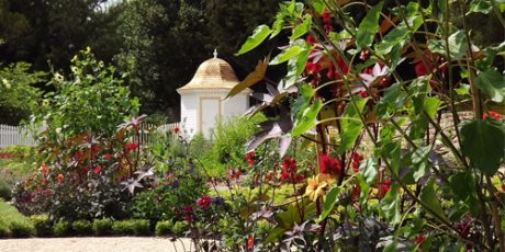 The American Museum & Gardens, in Bath, set to launch £2-million pound 'New American Garden.'