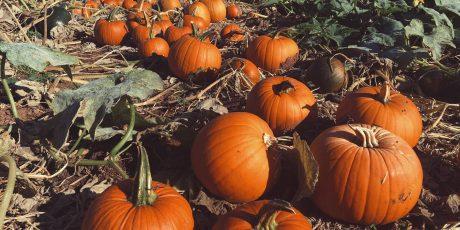Farrington's Prepare for Bumper Fun at Annual Pumpkin Festival!