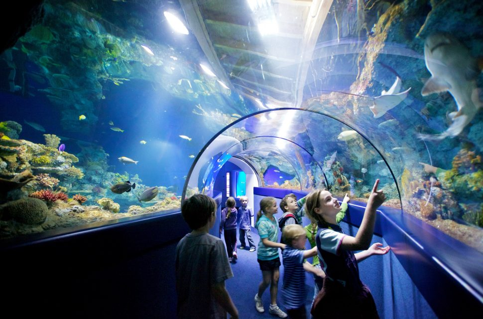 Win a family ticket to Bristol Aquarium