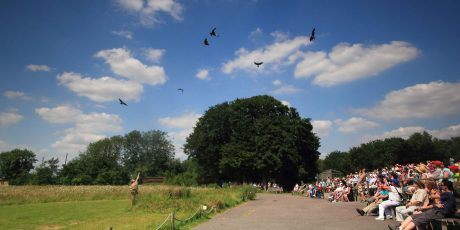 Win a family ticket to The Hawk Conservancy Trust