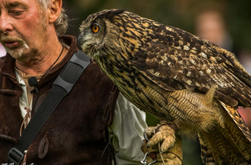 Medieval Falconry at The Bishop's Palace Saturday 13th April 10am-4pm