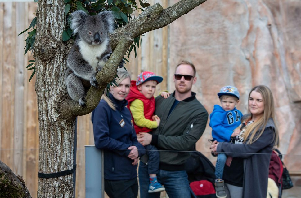 Win a Family Ticket to Longleat
