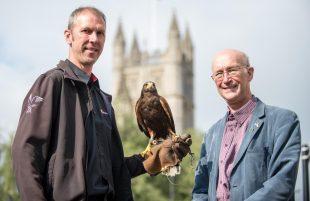 Gulls in a flap over Bath's Harris Hawk