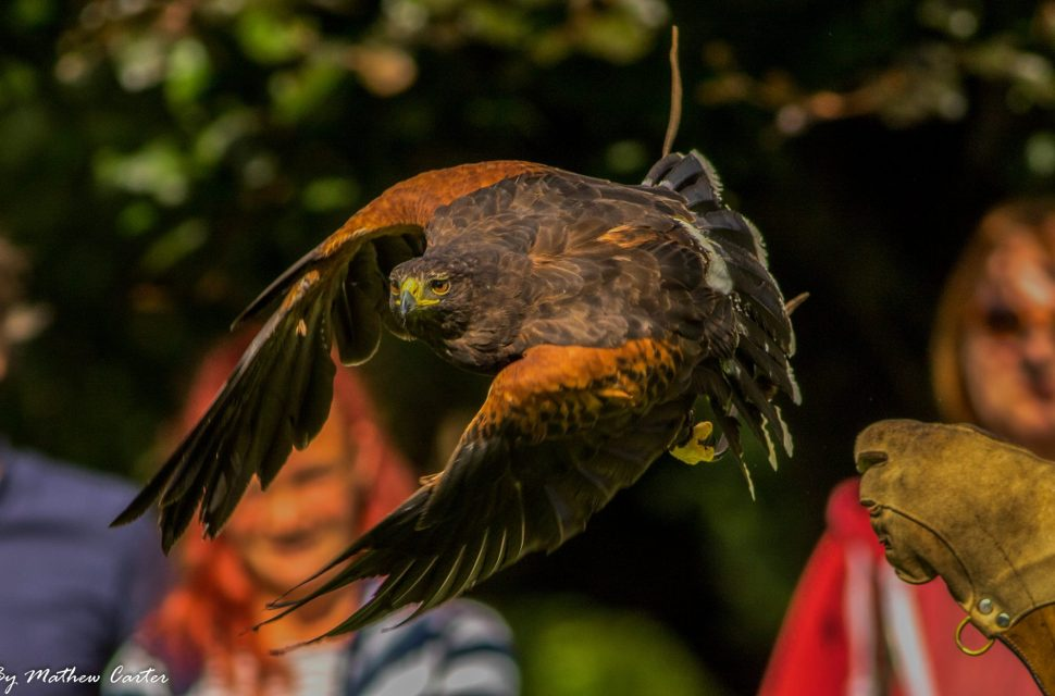 Medieval Falconry Day at The Bishop's Palace