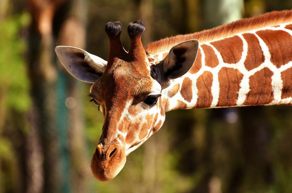 Visit the zoo from your own home!