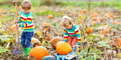 Thousands of Pumpkins Are Ready to Pick in Weston-super-Mare!