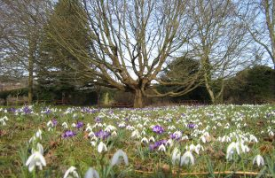 Exercise and Enjoy Snowdrops at The Bishop's Palace