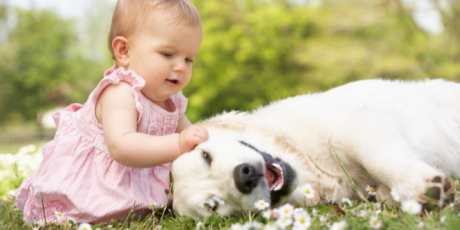 Finding the perfect family pet